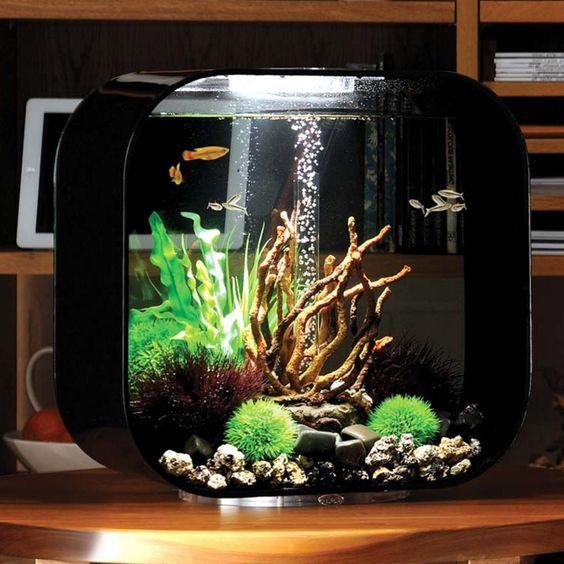 42 Stunning Aquarium Design Ideas for Indoor Decorations